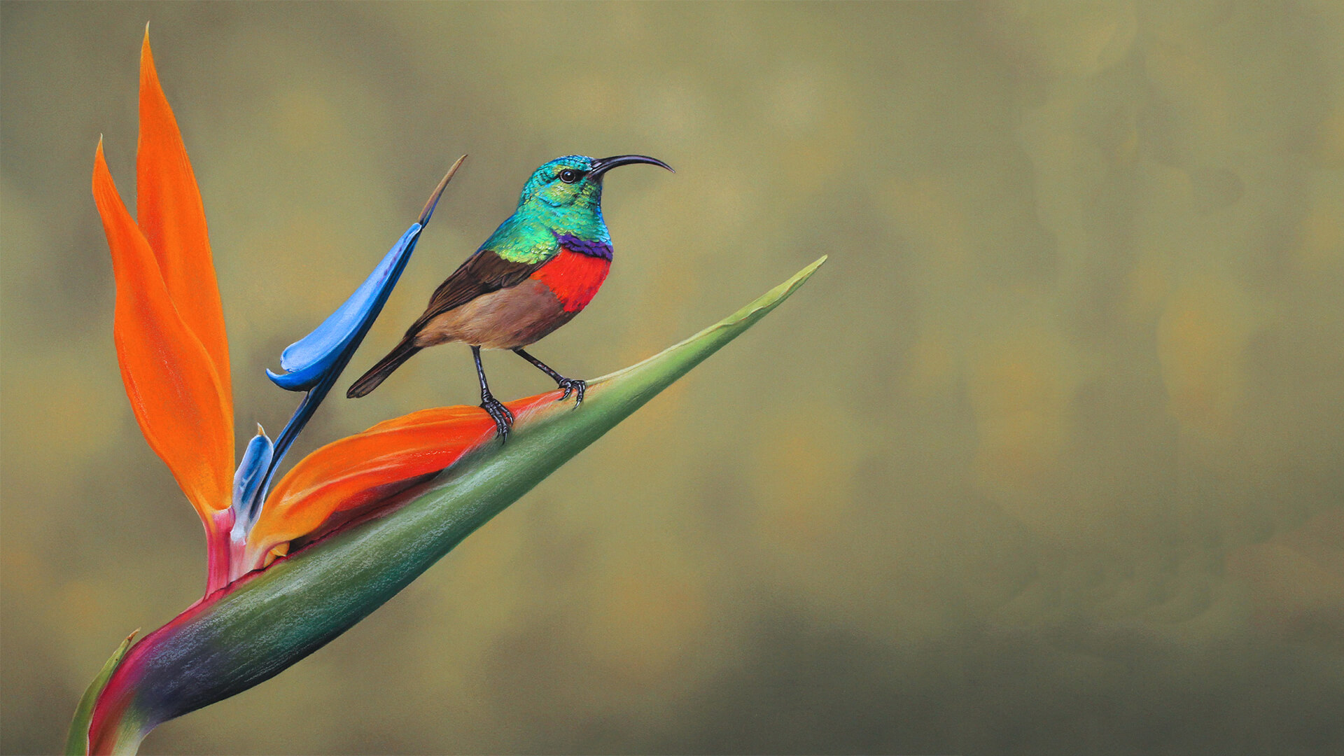 Download Wallpaper 1920x1080 birds, flying, colorful